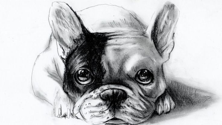 in this speed drawing i'll show you how to draw a french bulldog,made by charcoal black pencil...i hope you'll like it :-) in questo video vi mostro come disegnare un bulldog francese,fatto con matita a carboncino charcoal.spero vi piaccia :-) My YOUtube channel here ---> https://www.youtube.com/user/NFJdrawings