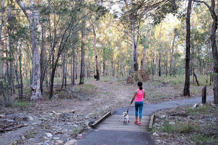 Stockyard Creek Circuit Brisbane Koala Bushland