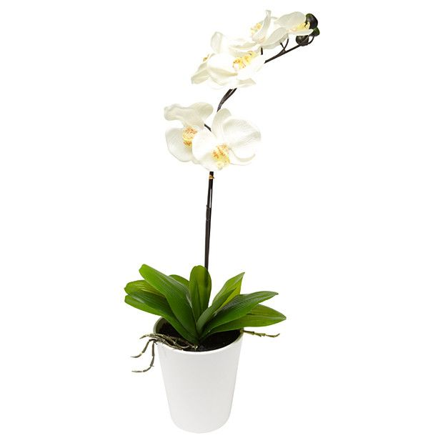Best Plain White Orchid Changes Your Bathroom Counter Top 640 x 480
