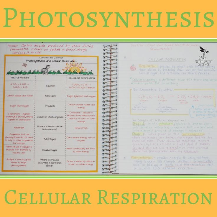 Students will compare and contrast Photosynthesis and Cellular Respiration in this graph found inside my Life Science Interactive Notebook – Cell Processes & Energy.