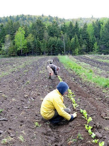 WWOOF Canada | living, learning, and sharing organic lifestyles Free volunteer help exchange on organic farms and small holdings