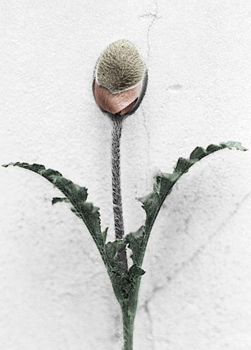 Vee Speers photography - http://www.veespeers.com/
