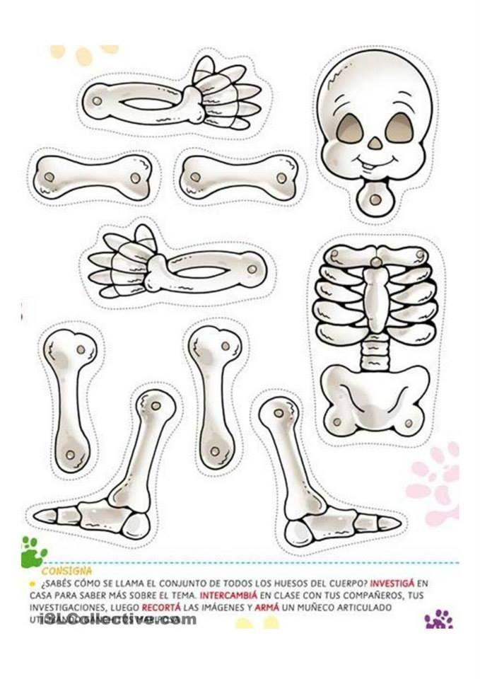 moje tělo - skelet