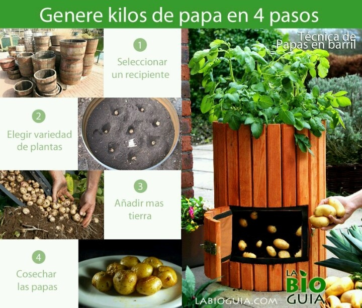 A sembrar papas huerta pinterest for Como cultivar patatas