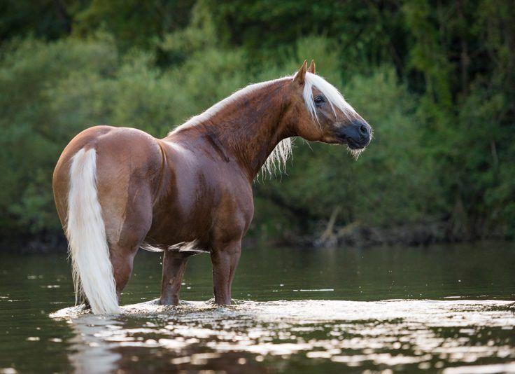 Lassen Sie uns gemeinsam Erinnerungen für die Ewigkeit schaffen!Zusammen lassen wir von ihrem Tier einmalige Bilder für die Ewigkeit entstehen. Viele Möglichkeiten stehen uns zur Verfügung um den Charakter ihres Pferdes einzufangen und natürliche Fotos zu…