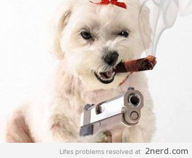 Funny Pics Of Dogs With Guns 9 best FUNNY images on...