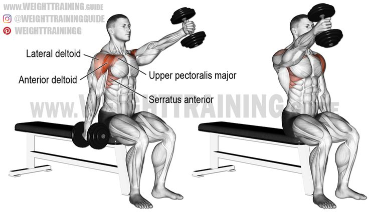 Seated alternating dumbbell front raise. An isolation exercise. Target muscle: Anterior Deltoid. Synergistic muscles: Lateral Deltoid, Upper Pectoralis Major, Serratus Anterior, and Middle and Lower Trapezius.