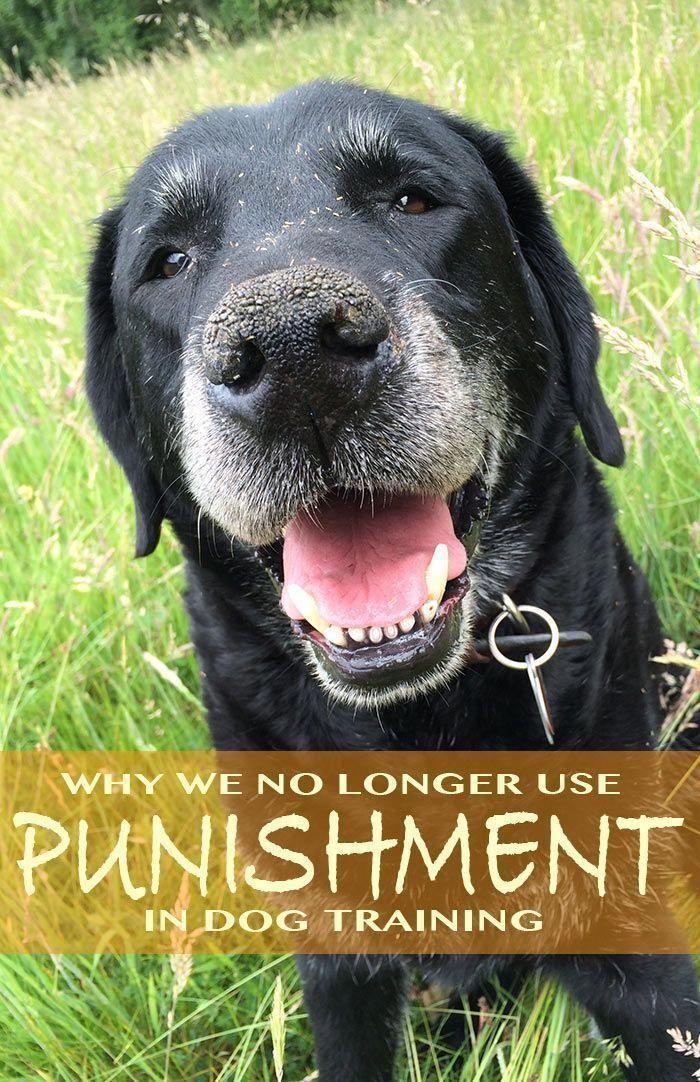 Older Dog Toileting Inside Dog Training Obedience Dog Training