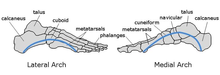 9 Best Functional Anatomy Images On Pinterest