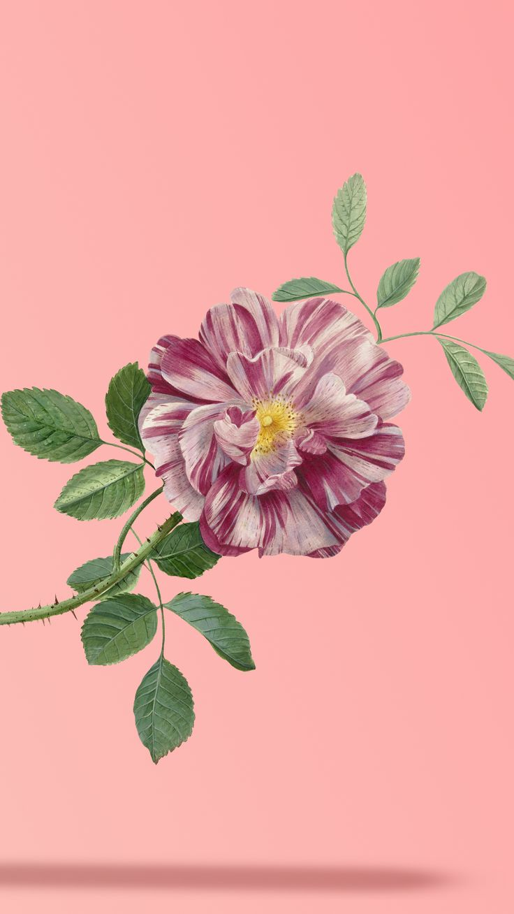 Papel de parede Flor em fundo Rosê 736