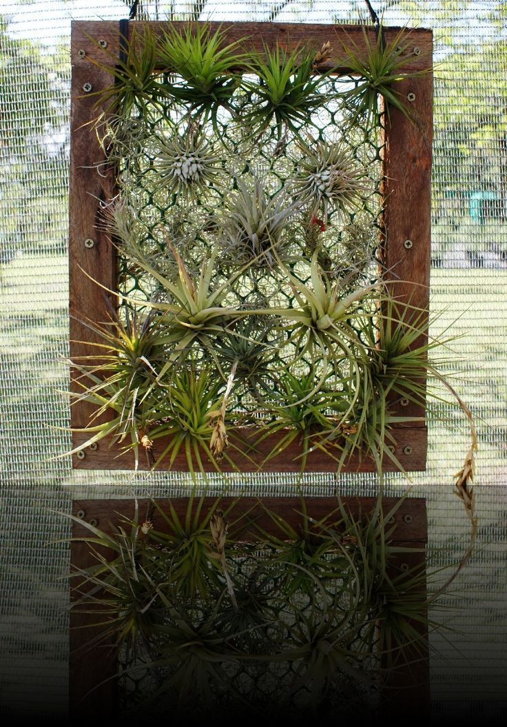 Air plants- creative displays   Gallery   Rare and Air