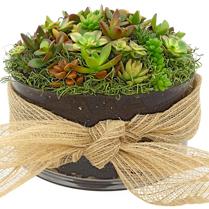 lush succulent bouquet   instead of roses - how about this beautiful and everlasting succulent bouquet? it will be the gift that keeps on growing! created by luludi living art and available for delivery here: http://www.luludi.net/succulent-bouquet-deluxe/