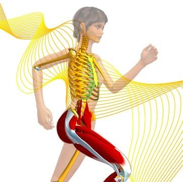 Nouveau site Anatomie 3D de Lyon 1