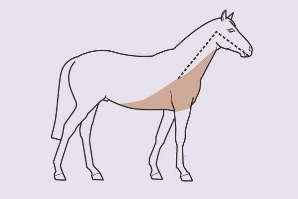 horse clipping patterns - Google Search