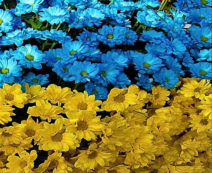 乌克兰花标志 壁纸