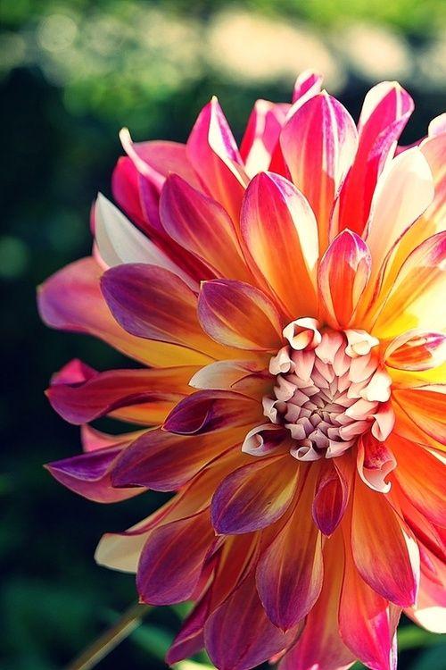 Pretty n colourful flower
