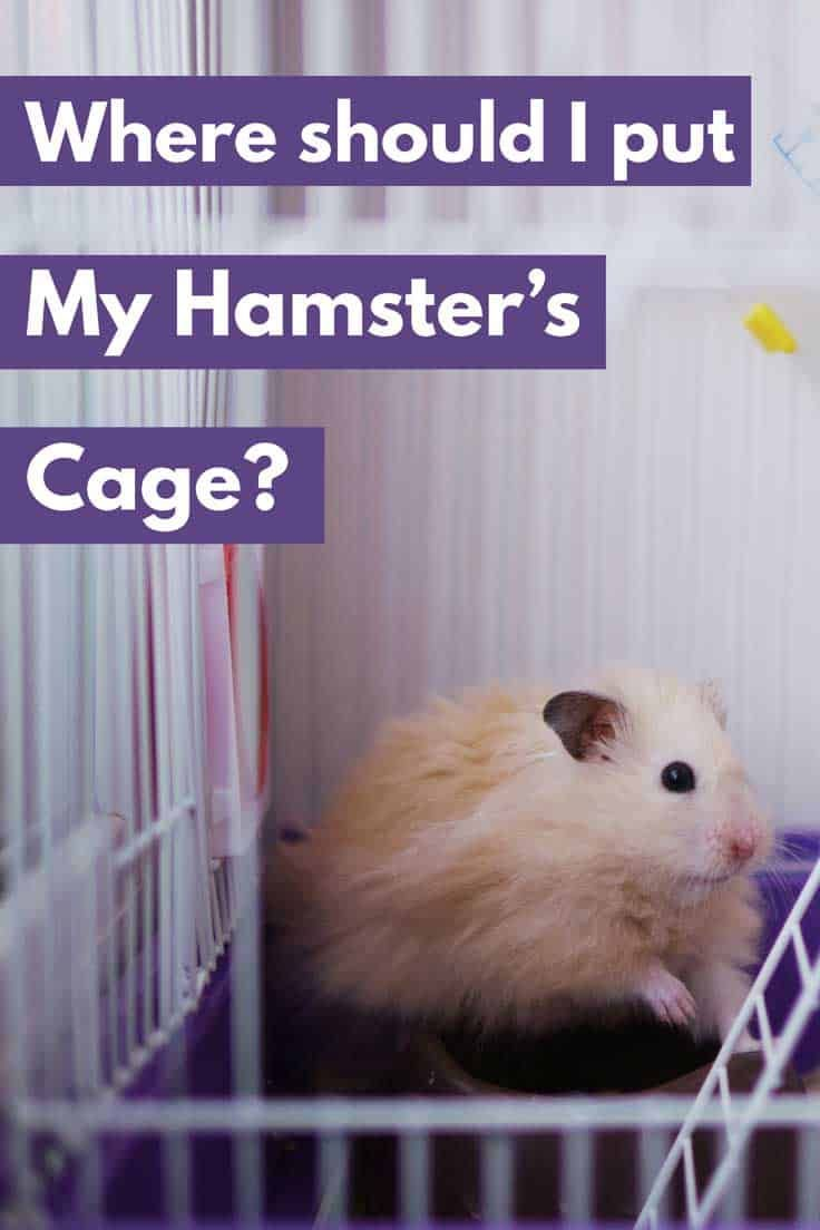 b03b4b29345a01d2c78dc4b3e07bef07 - How To Get My Hamster To Stop Biting His Cage