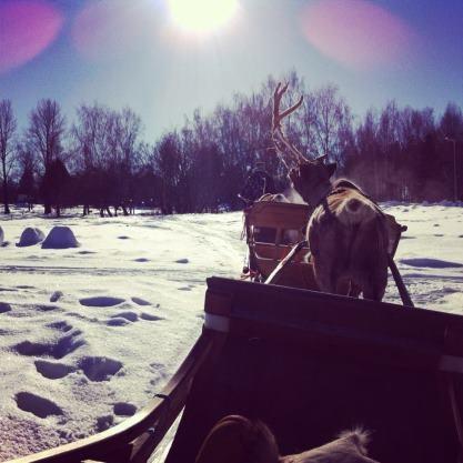 Reindeer-tour