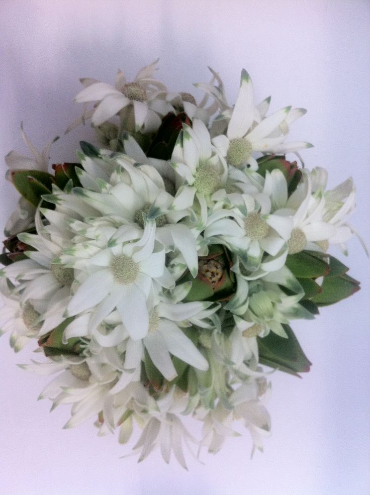 Flannel flowers and lucodendrum