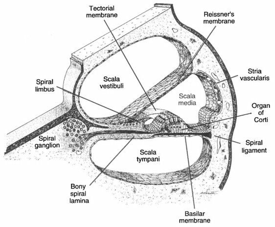 45 best Anatomy & Phisiolgy-Study & Mnemonics images on
