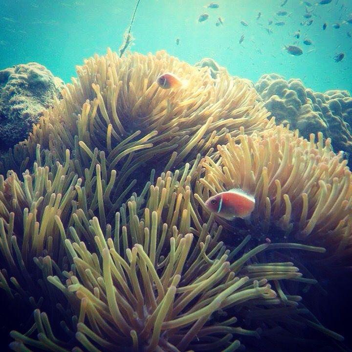 Les fonds marins / Under the sea | Koh Wai, Thaïlande