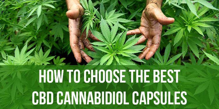 How to Choose the Best CBD Cannabidiol Caspules