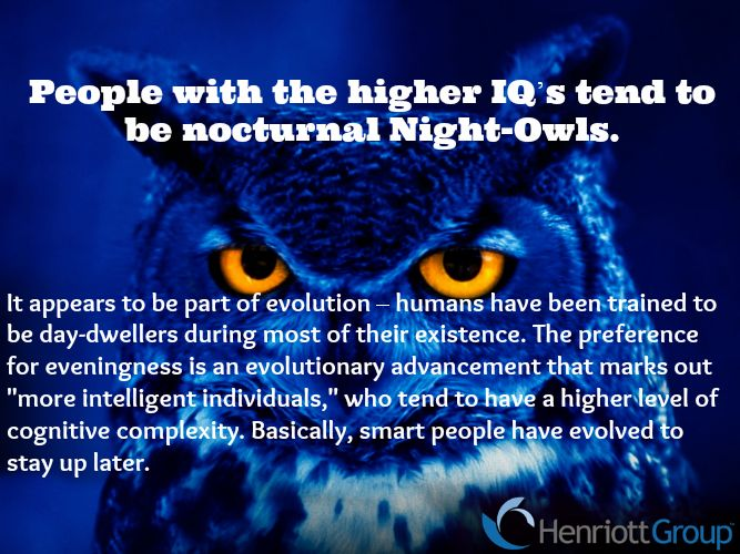 early bird night owl essay Night owl definition is - a person who keeps late hours at night how to use night owl in a sentence a person who keeps late hours at night  early bird related words.