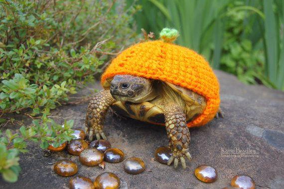 Katie Bradley de Vancouver tricote et crochète pour ses amies les tortues. Je te laisse découvrir avec émerveillement ces miss reptiliennes parées de leurs plus colorées et kitchissimes déguisement…