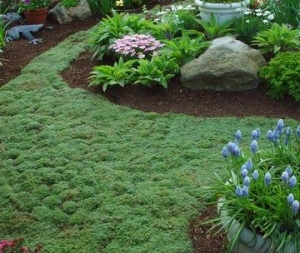43 best chestnut ideas images on pinterest | garden ideas, gardens ... - Patio Ground Cover Ideas