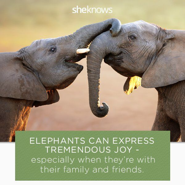 elephants facts for kids at: factoflife.net/animals/interesting-elephant-facts-for-kids.html