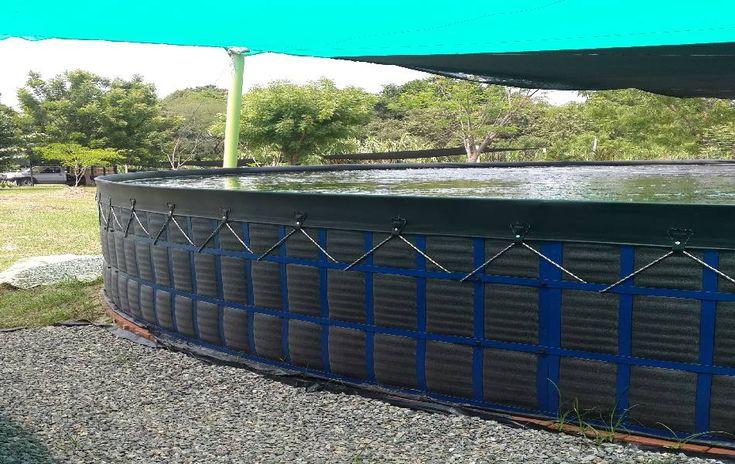 25 melhores ideias sobre tanques de piscicultura no for Cria de tilapia en estanques plasticos