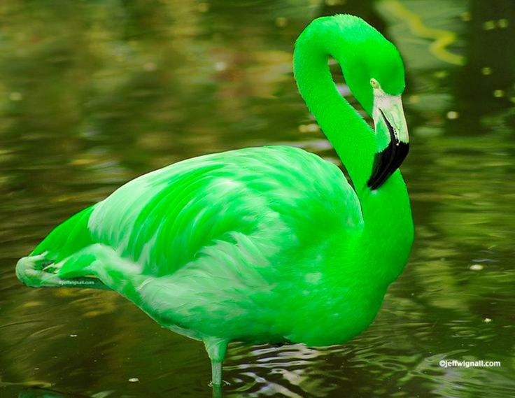 how to get those beautiful green colors in photoshop