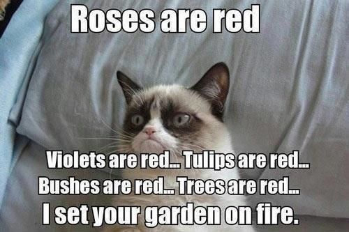 it's okay, grumpy cat, the whole thing was probably already dead anyway.