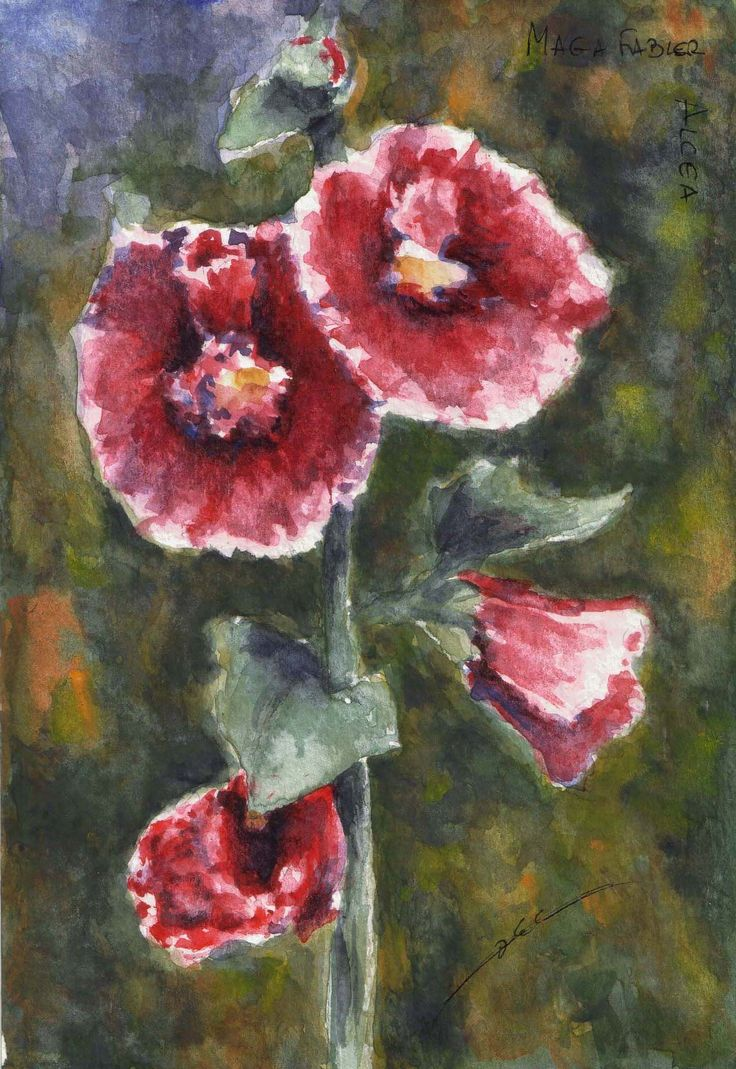 Burgundy hollyhock by Maga Fabler; watercolor