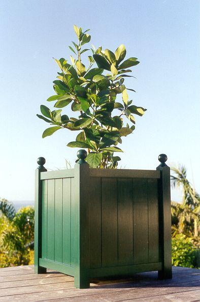 Plantub planted with New Zealand native shrub