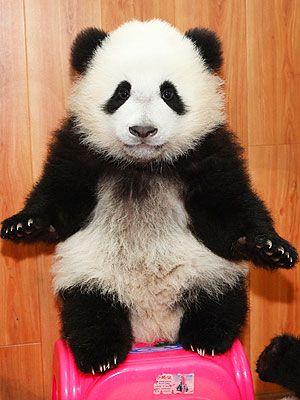 Government Shutdown 2013: Panda Cam Photos