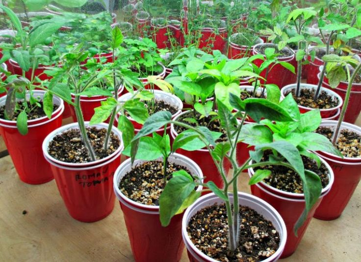 25 Best Images About Easy To Grow Vegetables Fruits On