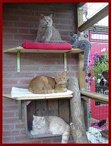 Onze kattenren