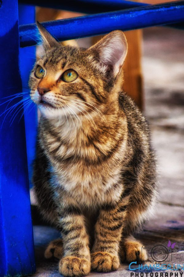 Little Greek Kitty... Nafplion, Greece...    cats, cats, and more cats - pxe