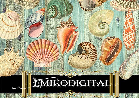 80% Off Sea Shells Digital Collage SheetVintage Shell