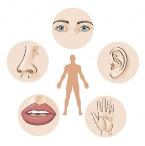 Sight, Scent, and Sound: The Role of Senses in Retail Marketing