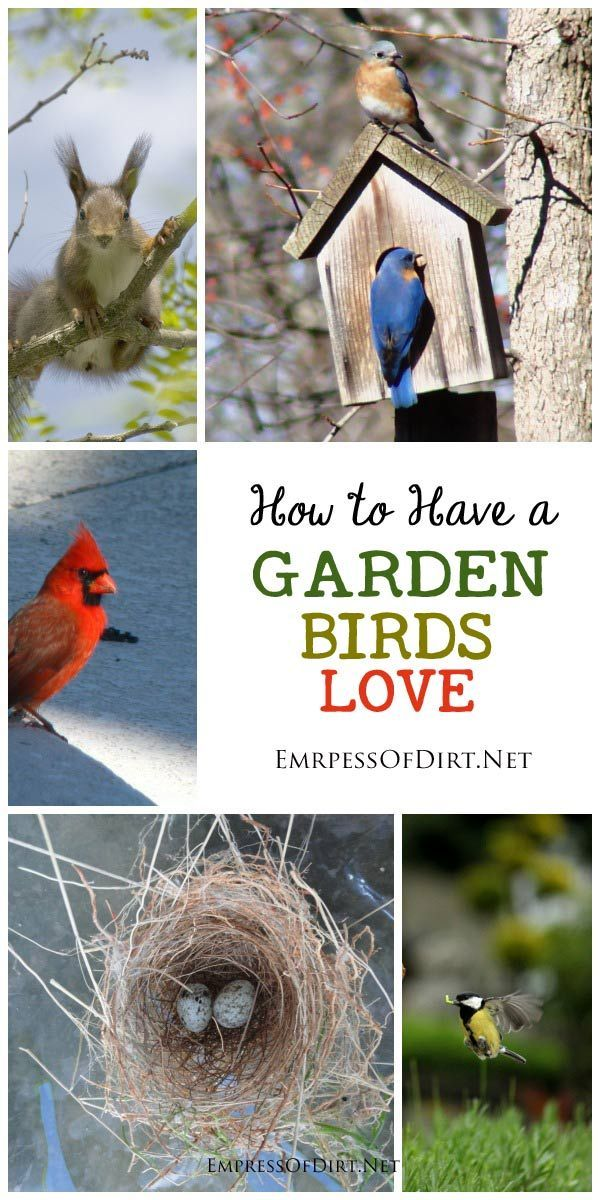You'll have a garden birds will love if you: Provide a good habitat with trees and shrubs and minimize predator stress. Grow organically. Distinguish between garden art birdhouses and nesting boxes. Use good quality bird seed and feeders. And keep water fresh and clean.