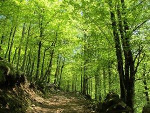 bosques templados clima