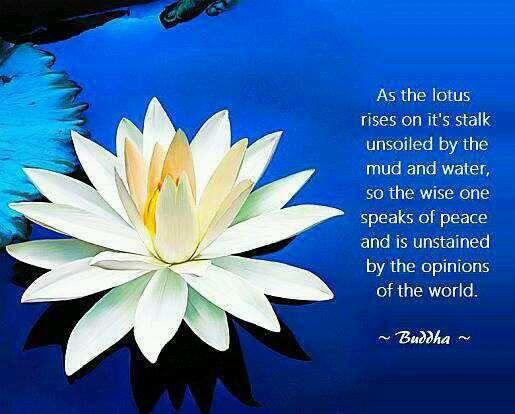 13 best lotus flower images on pinterest tattoo ideas lotus buddah with lotus flower google search mightylinksfo