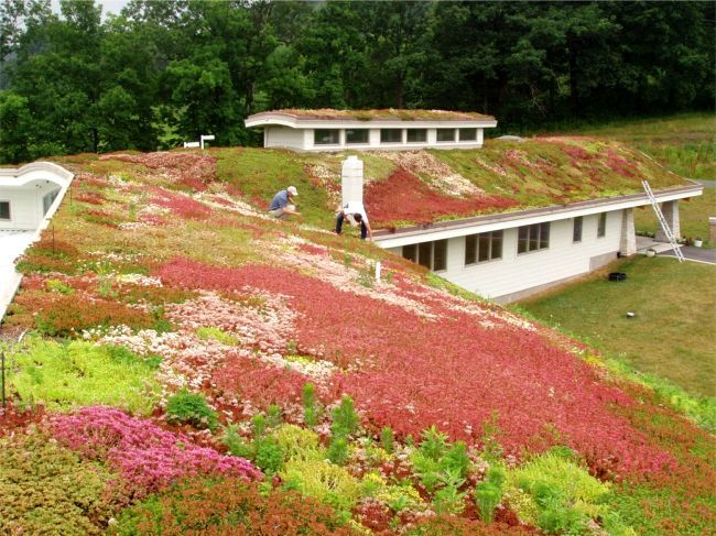 beautiful plant specification for green roof