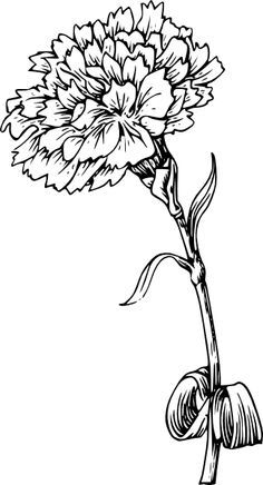 black and white drawing marigold flower - Google Search