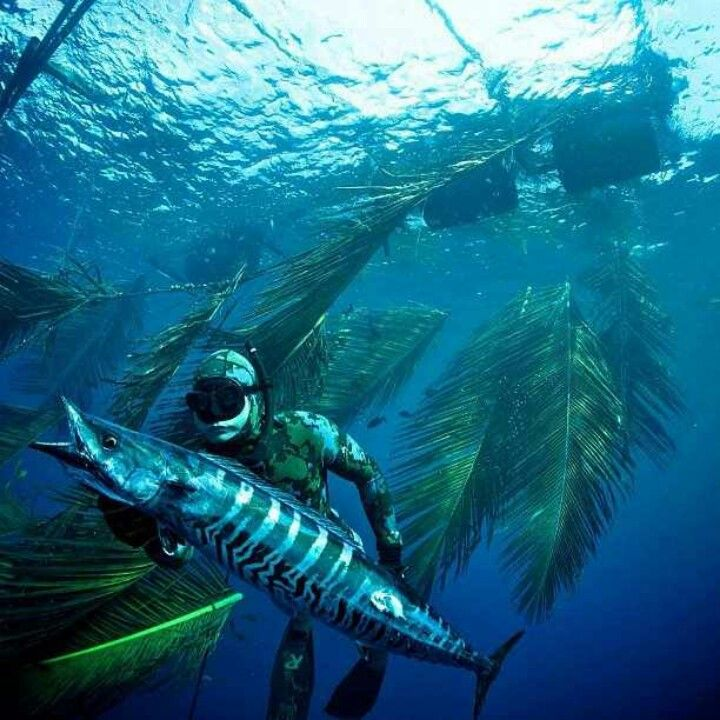 Wahoo Spearfishing #SubsurfaceMayhem