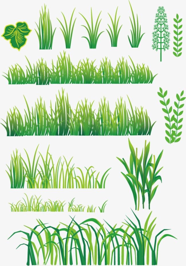 Vector Grass Grass Green Table Frame Pattern Png And Vector With Transparent Background For Free Download Grass Painting Grass Drawing Plant Vector