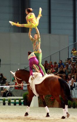 Equestrian Vaulting   Bing Images