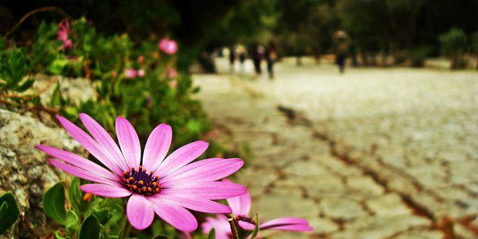 Τα 10 ωραιότερα μέρη στην Αθήνα: Άνοιξη στο πλακόστρωτο του Πικιώνη, στου Φιλοπάππου